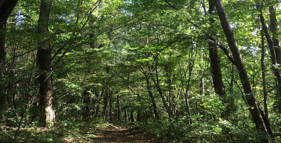 三瓶山自然林散策コース